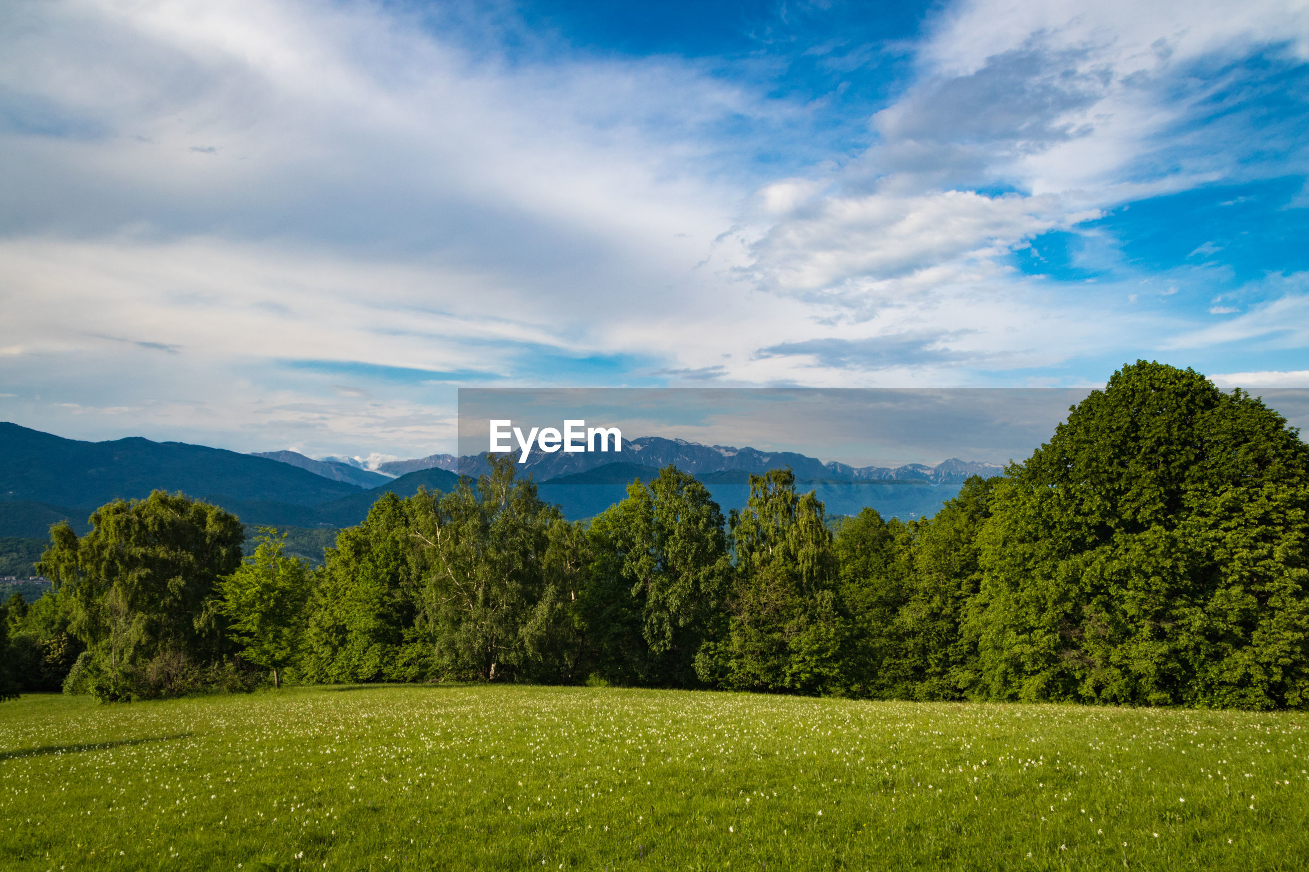 SCENIC VIEW OF TREES AND LANDSCAPE AGAINST SKY