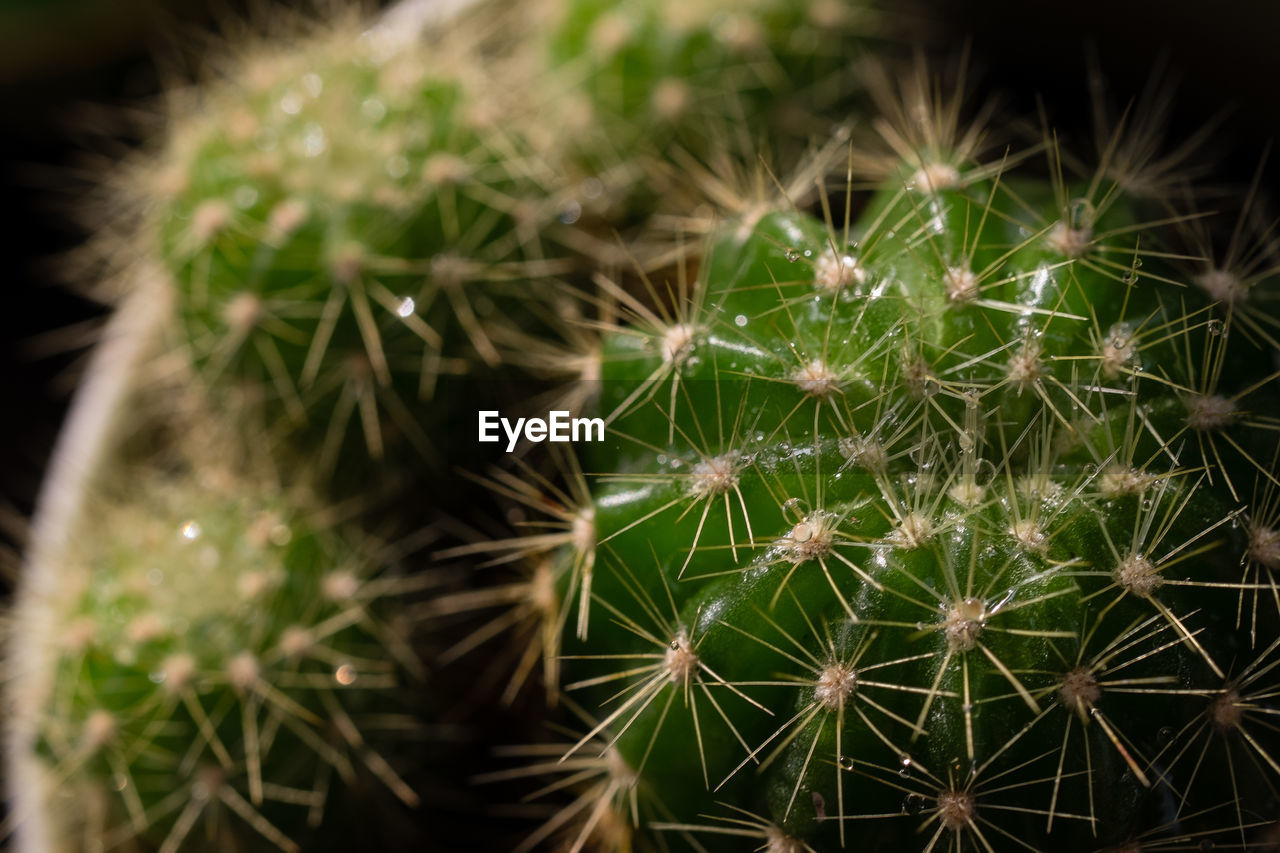 cactus, succulent plant, plant, close-up, growth, no people, beauty in nature, green color, nature, fragility, focus on foreground, thorn, selective focus, spiked, potted plant, sharp, outdoors, vulnerability, natural pattern, communication