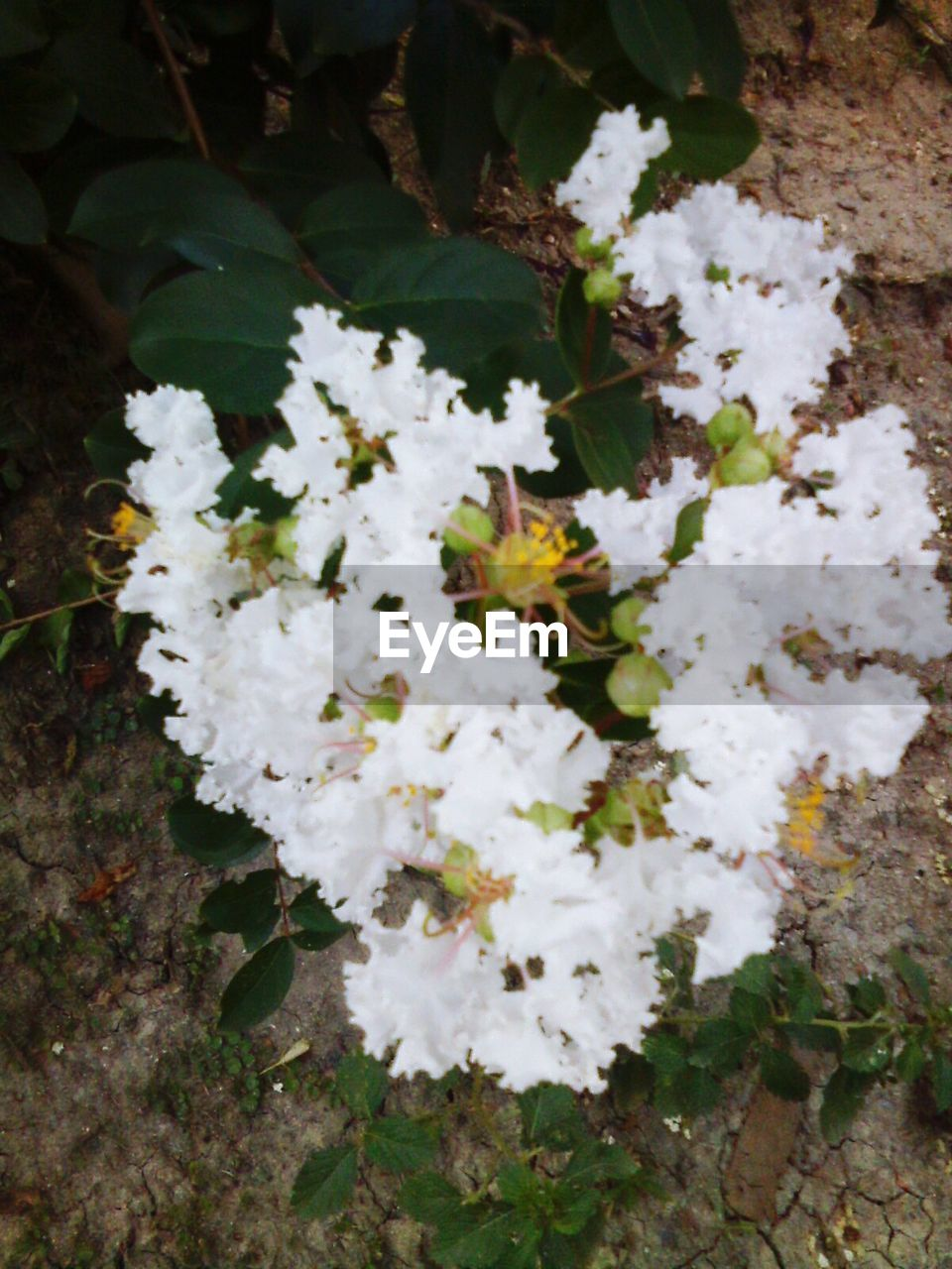 flower, white color, nature, growth, blossom, fragility, no people, beauty in nature, freshness, outdoors, day, close-up