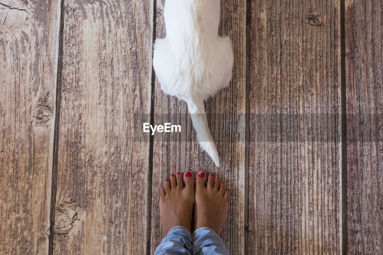 Low section of woman standing by dog on wooden floor