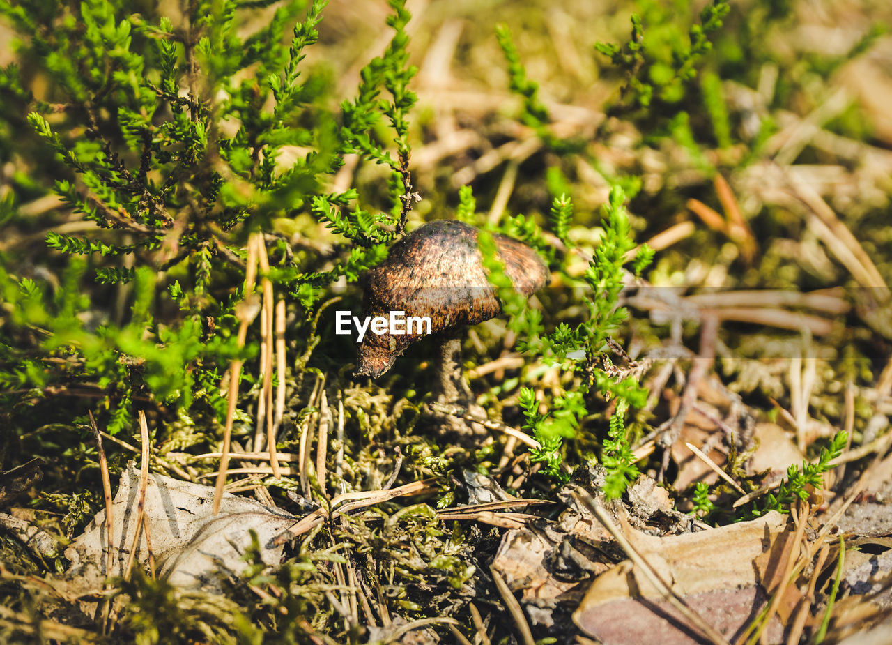 animal wildlife, plant, nature, gastropod, animal, animal themes, mollusk, animals in the wild, selective focus, one animal, land, day, field, no people, shell, close-up, invertebrate, green color, animal shell, snail, outdoors