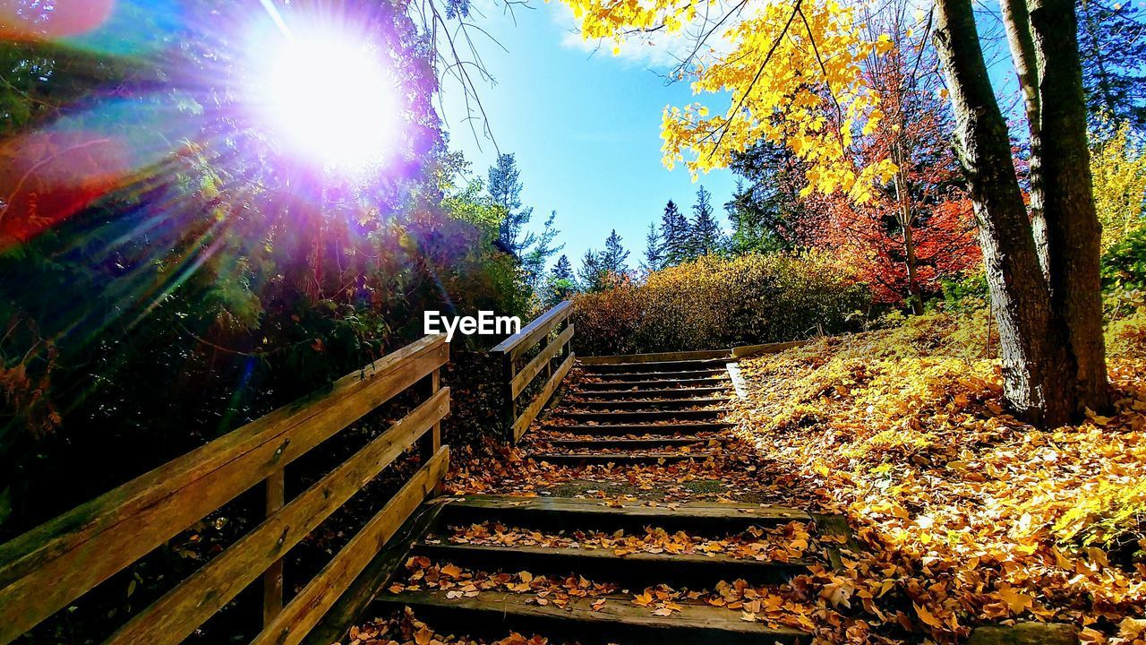 steps, steps and staircases, staircase, tree, autumn, sunlight, nature, sun, railing, no people, beauty in nature, day, outdoors, sky