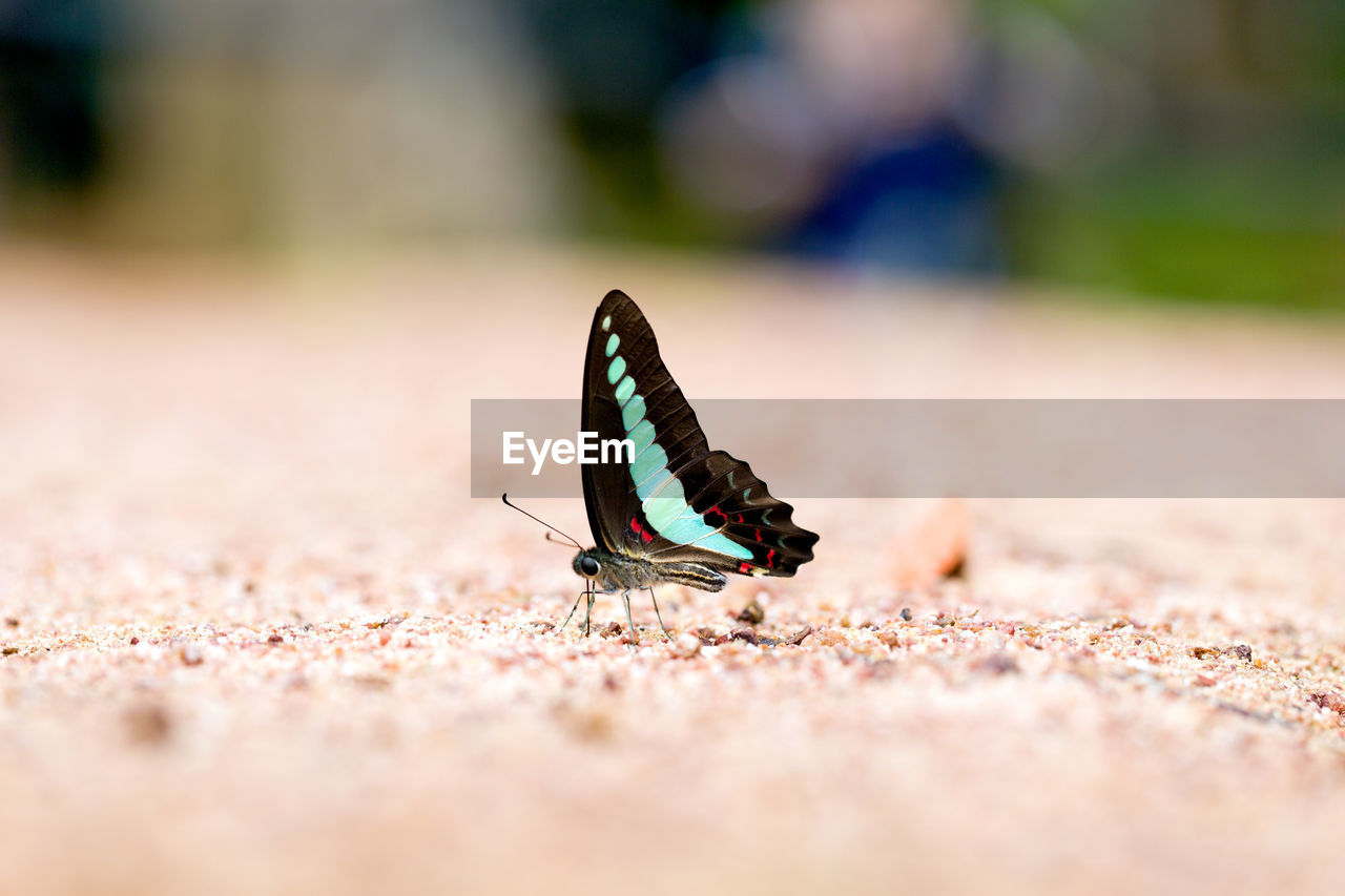 one animal, animals in the wild, insect, animal themes, selective focus, animal wildlife, day, outdoors, close-up, butterfly - insect, no people, nature