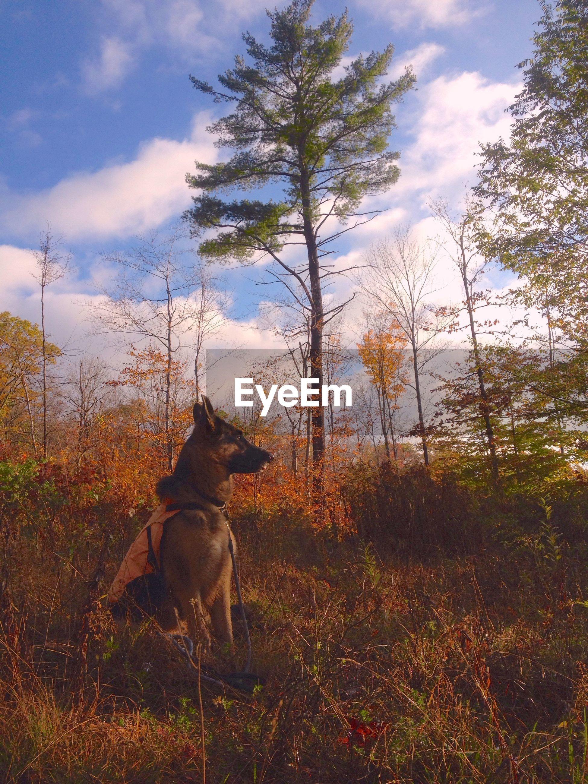 Dog on landscape against trees