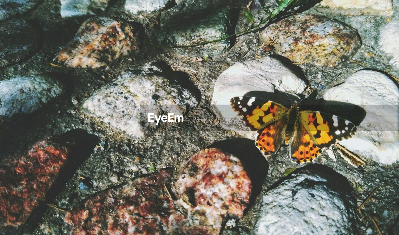 animal wildlife, animal themes, animal, animals in the wild, one animal, rock, rock - object, solid, nature, invertebrate, insect, no people, close-up, day, vertebrate, outdoors, butterfly - insect, plant, textured, animal wing, butterfly, marine