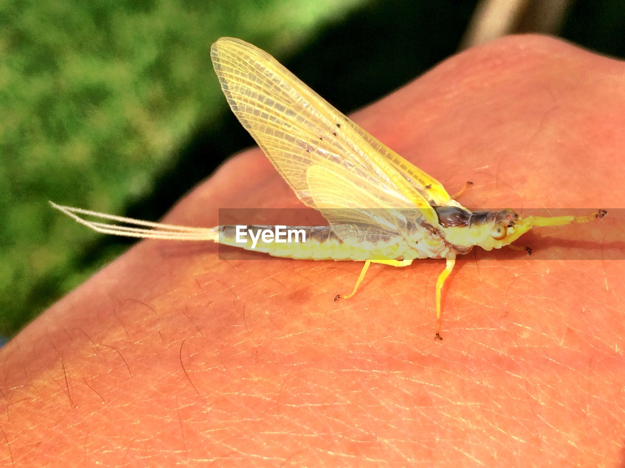 Close-up of insect on cropped hand