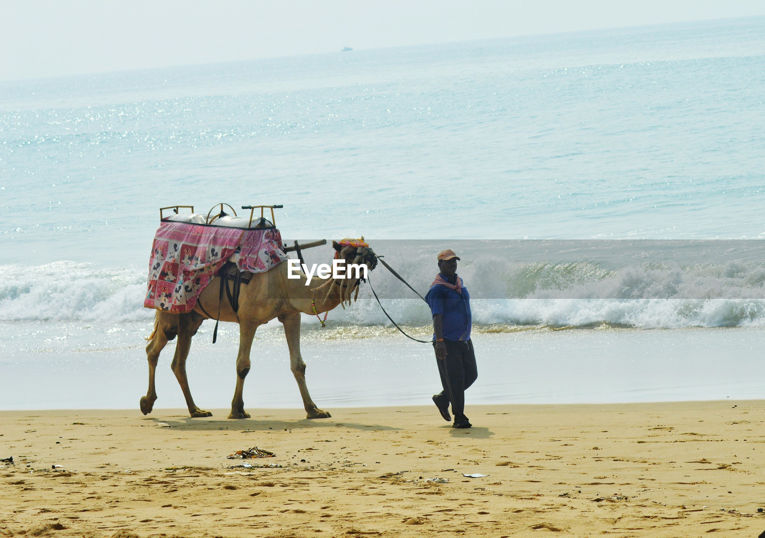 Full length of man walking with camel on beach