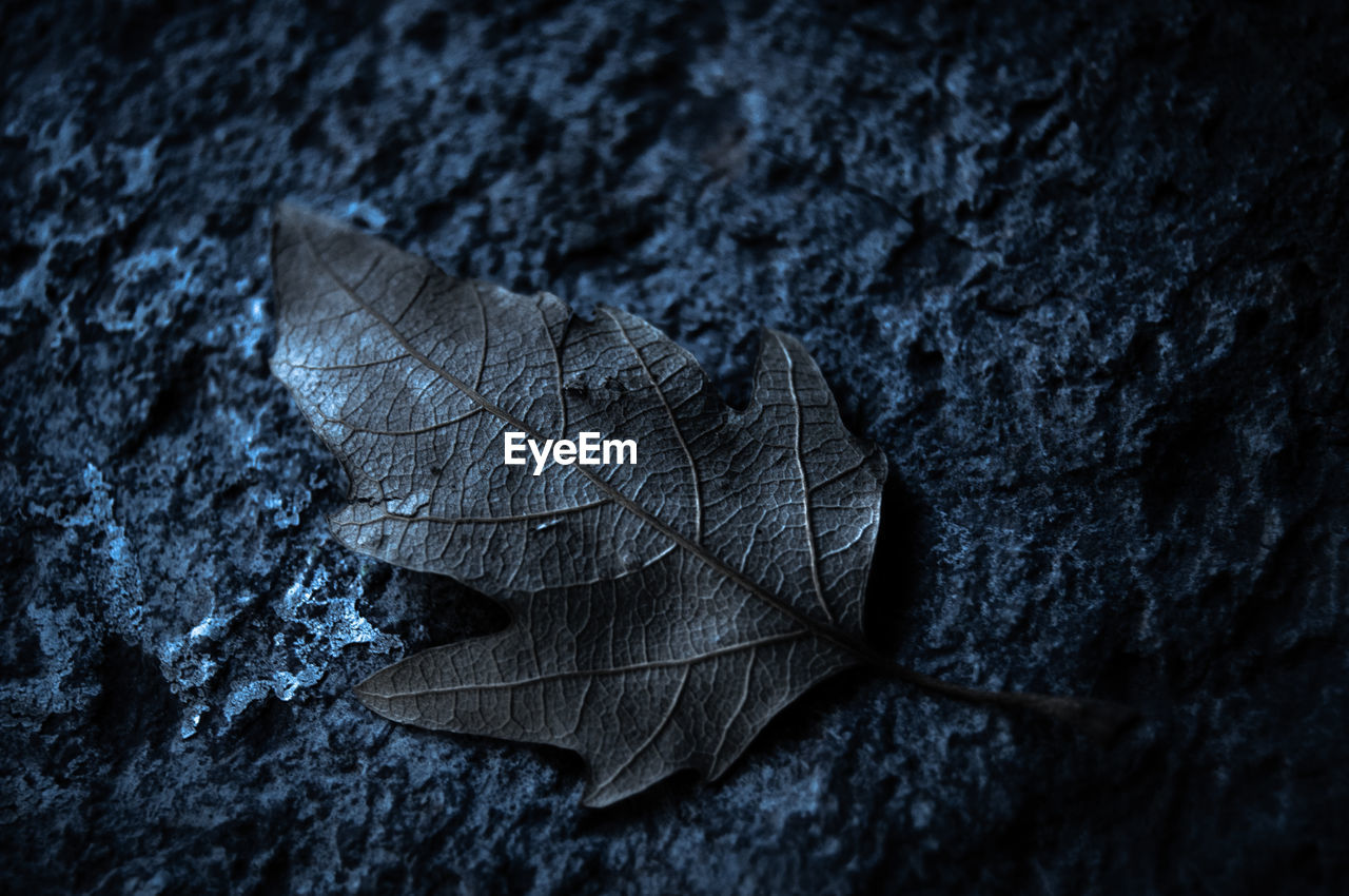 Close-up of dried autumn leaves on stone