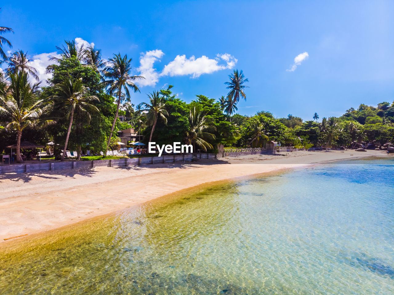 tropical climate, palm tree, tree, water, sky, plant, beach, land, sea, beauty in nature, nature, tranquil scene, sand, scenics - nature, blue, tranquility, coconut palm tree, cloud - sky, sunlight, no people, outdoors, tropical tree