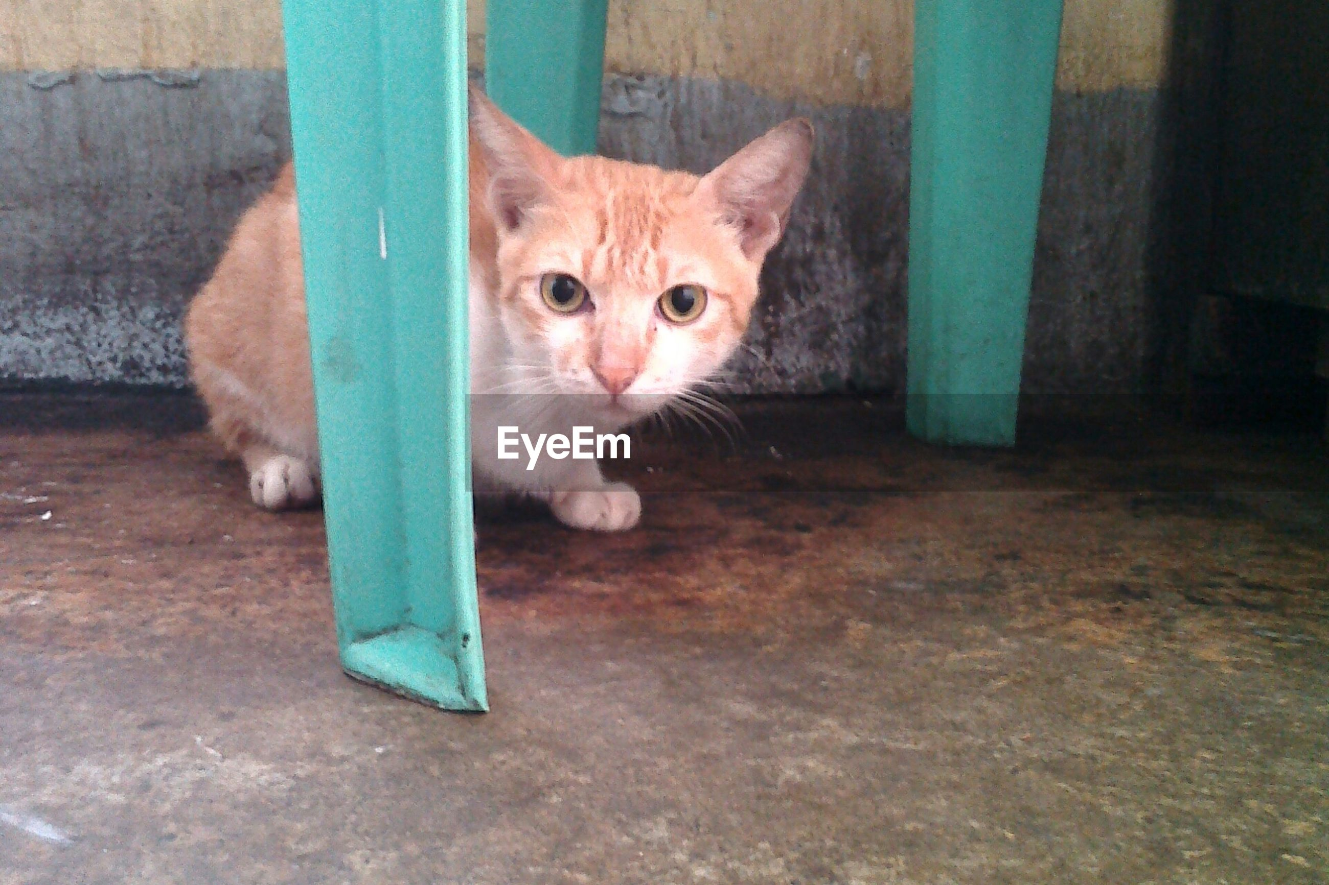 domestic animals, pets, animal themes, one animal, domestic cat, mammal, cat, portrait, looking at camera, feline, whisker, indoors, staring, sitting, alertness, no people, animal head, cute, animal eye, zoology