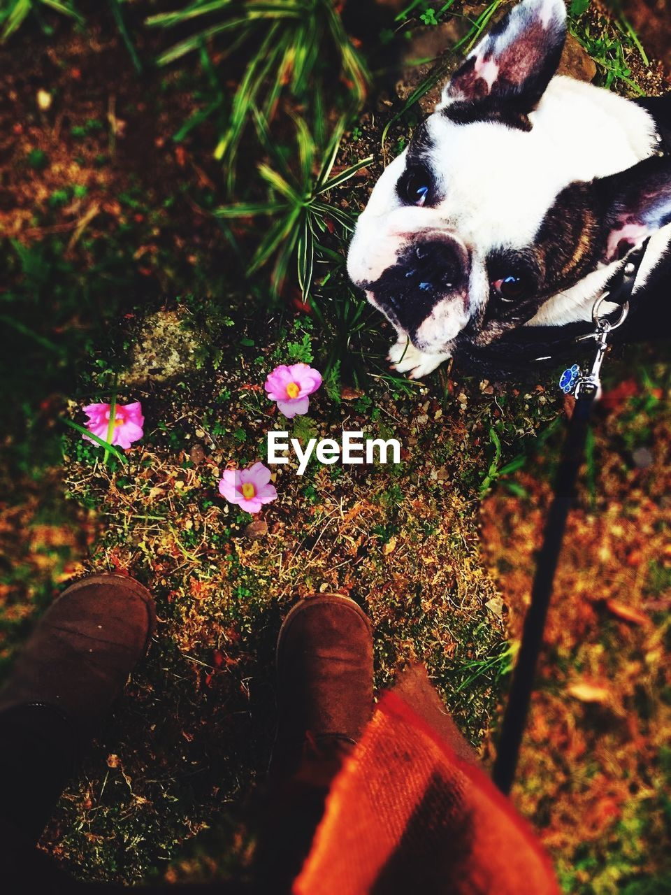 dog, pets, domestic animals, animal themes, mammal, one animal, high angle view, day, outdoors, low section, human leg, one person, standing, real people, human body part, nature, grass, flower, close-up, people