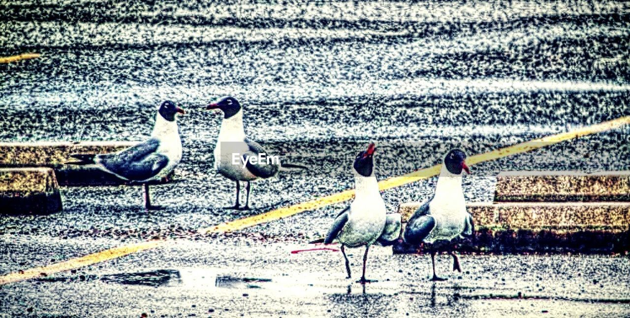 bird, animals in the wild, animal themes, animal wildlife, nature, water, no people, day, outdoors, large group of animals