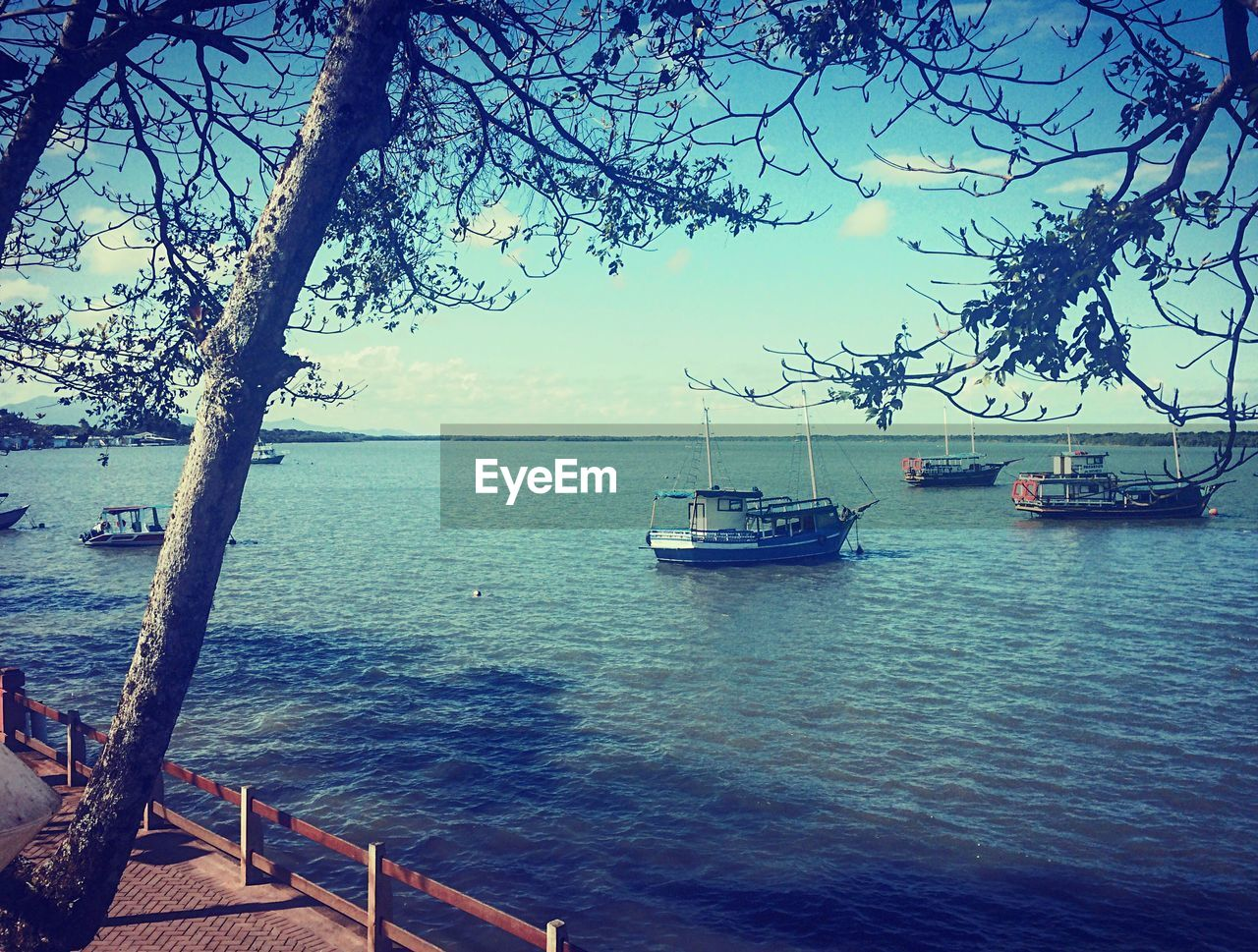 sea, water, nautical vessel, tree, beauty in nature, transportation, nature, mode of transport, scenics, tranquility, outdoors, tranquil scene, no people, sky, horizon over water, branch, day, moored