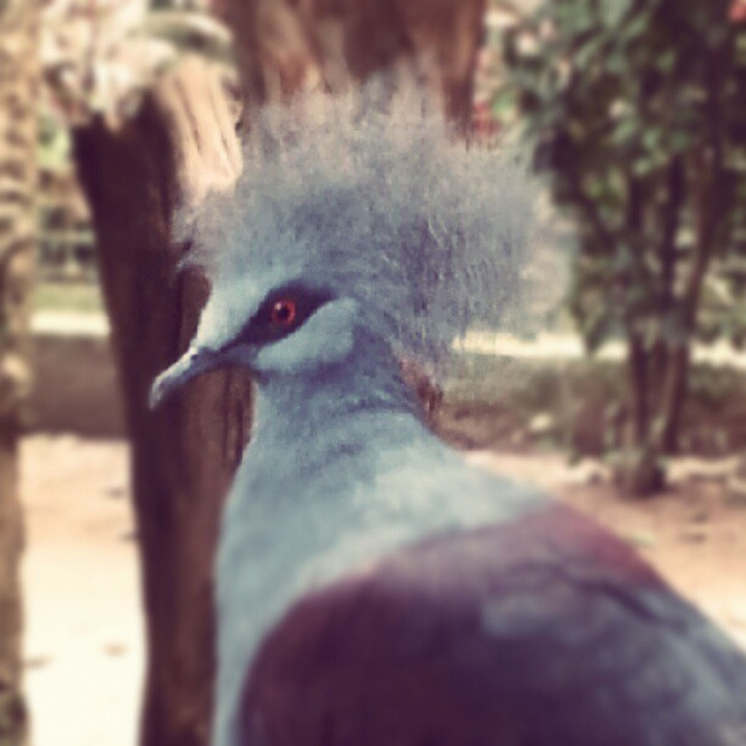 animal themes, one animal, focus on foreground, close-up, animals in the wild, mammal, wildlife, bird, domestic animals, animal head, livestock, animal body part, day, outdoors, nature, zoology, part of, vertebrate, no people, looking away