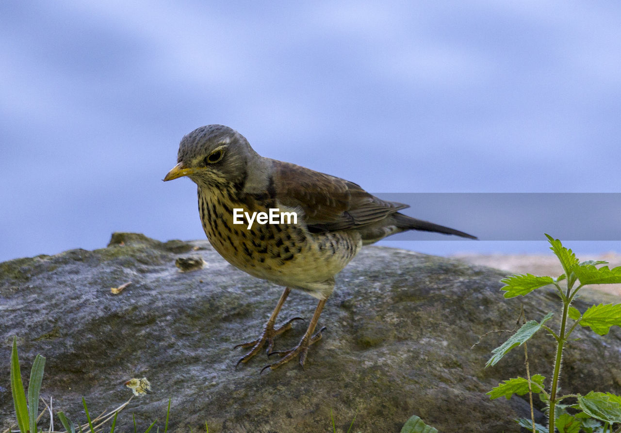 animal themes, one animal, animal, animals in the wild, animal wildlife, bird, vertebrate, nature, perching, day, no people, focus on foreground, close-up, outdoors, side view, beauty in nature, looking away, plant, looking, beak