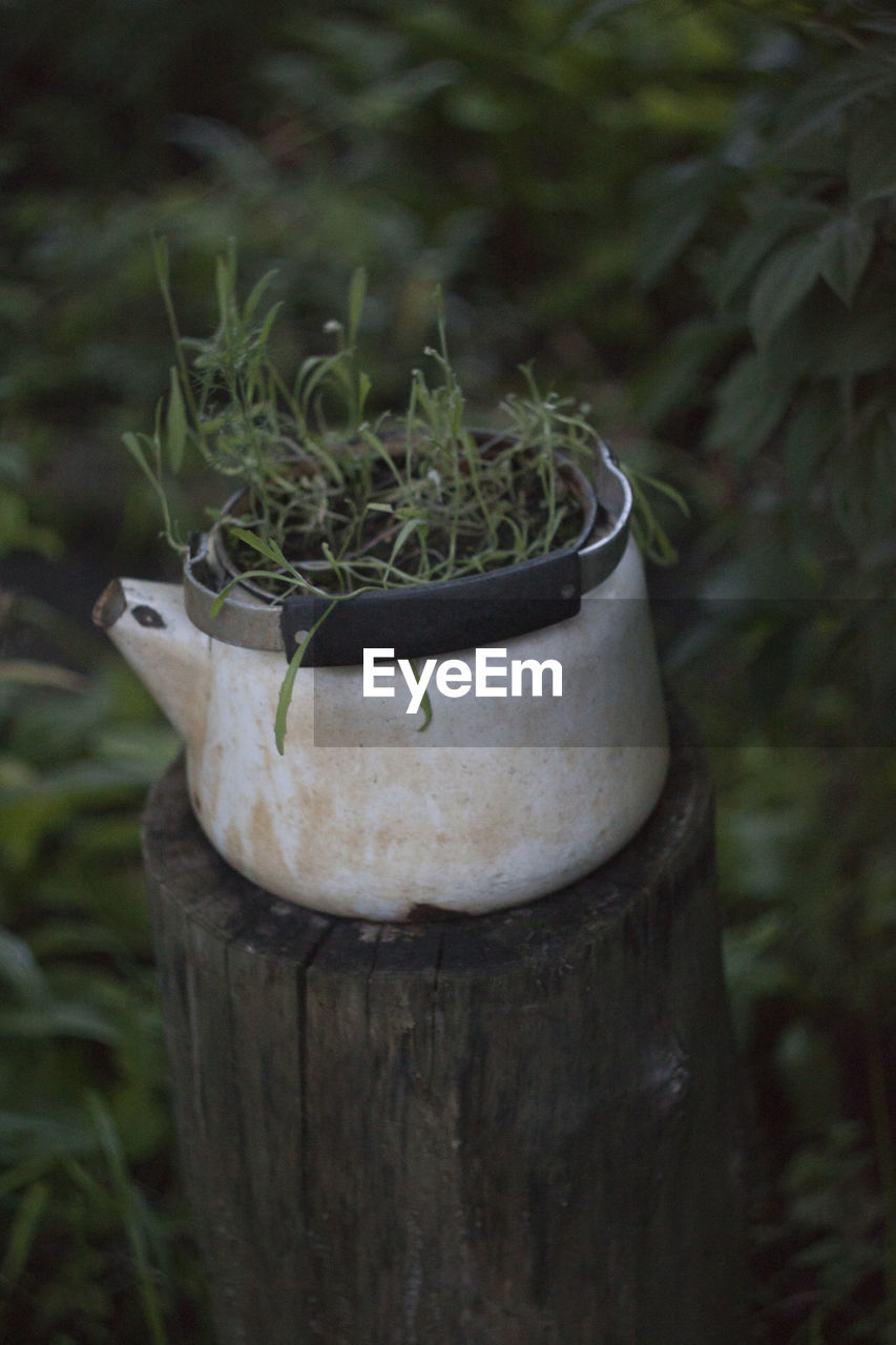 plant, growth, focus on foreground, close-up, day, no people, nature, outdoors, land, field, beauty in nature, potted plant, green color, front or back yard, wood - material, selective focus, container, one animal, white color, tree trunk