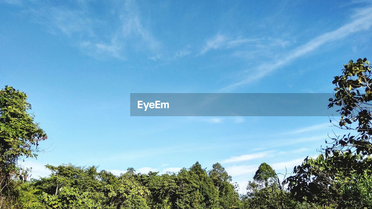 tree, plant, sky, beauty in nature, tranquility, tranquil scene, scenics - nature, growth, cloud - sky, day, low angle view, nature, no people, green color, blue, non-urban scene, outdoors, idyllic, land, sunlight