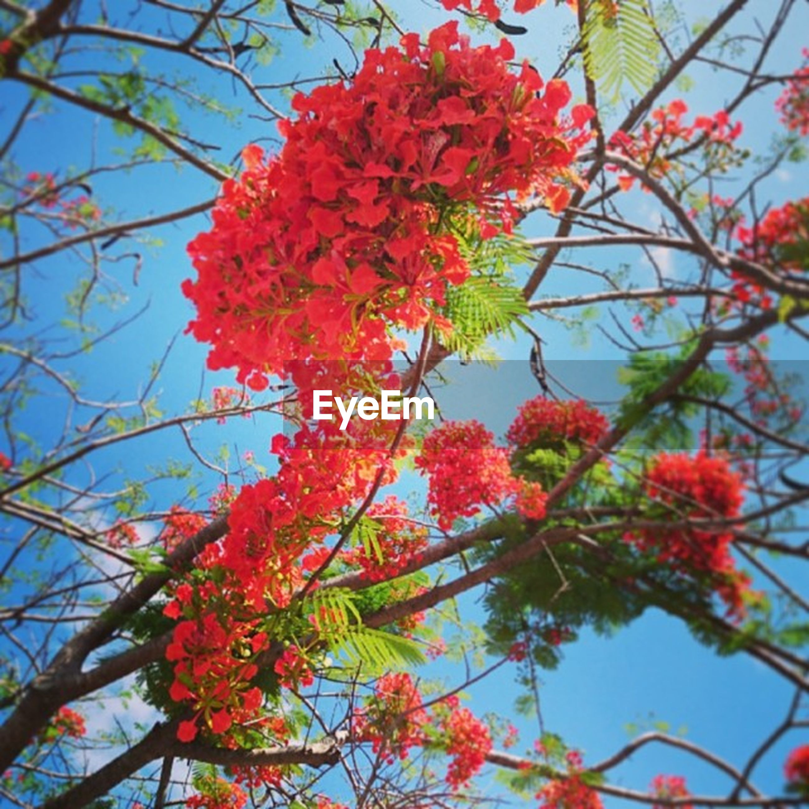 red, low angle view, tree, flower, branch, growth, freshness, beauty in nature, nature, fragility, sky, clear sky, season, blossom, autumn, day, blooming, change, leaf, springtime