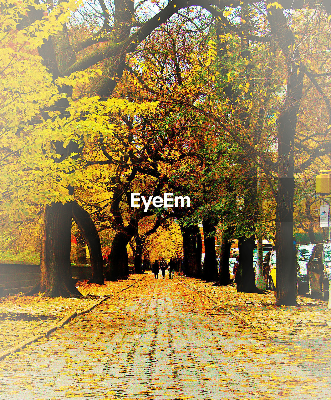 tree, autumn, change, nature, leaf, beauty in nature, the way forward, scenics, day, outdoors, growth, branch, tranquility, real people, road