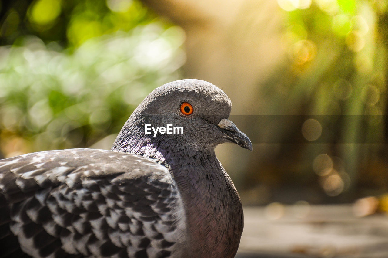 Close-up of pigeons on footpath during sunny day