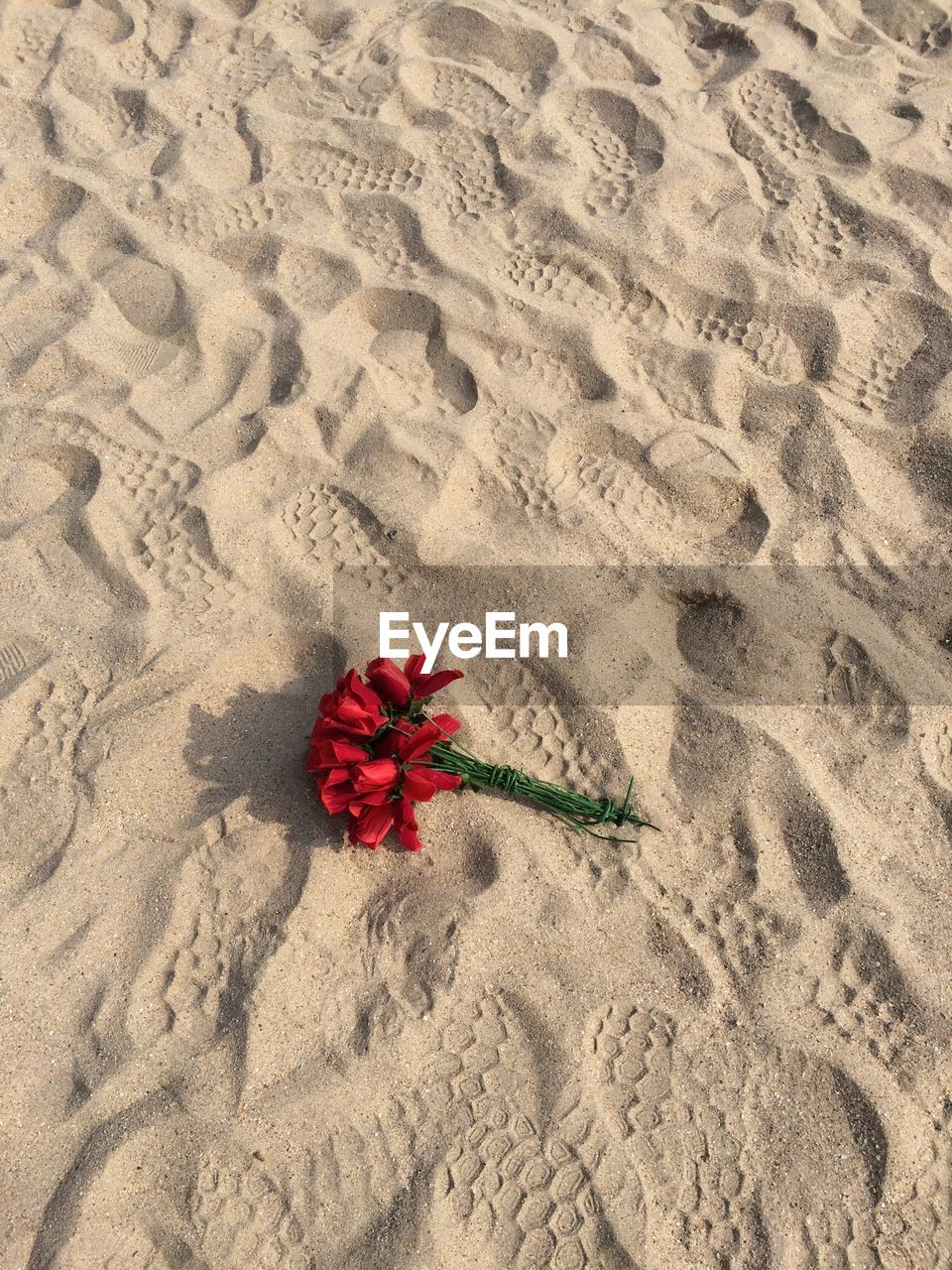 HIGH ANGLE VIEW OF RED FLOWER ON SAND AT BEACH