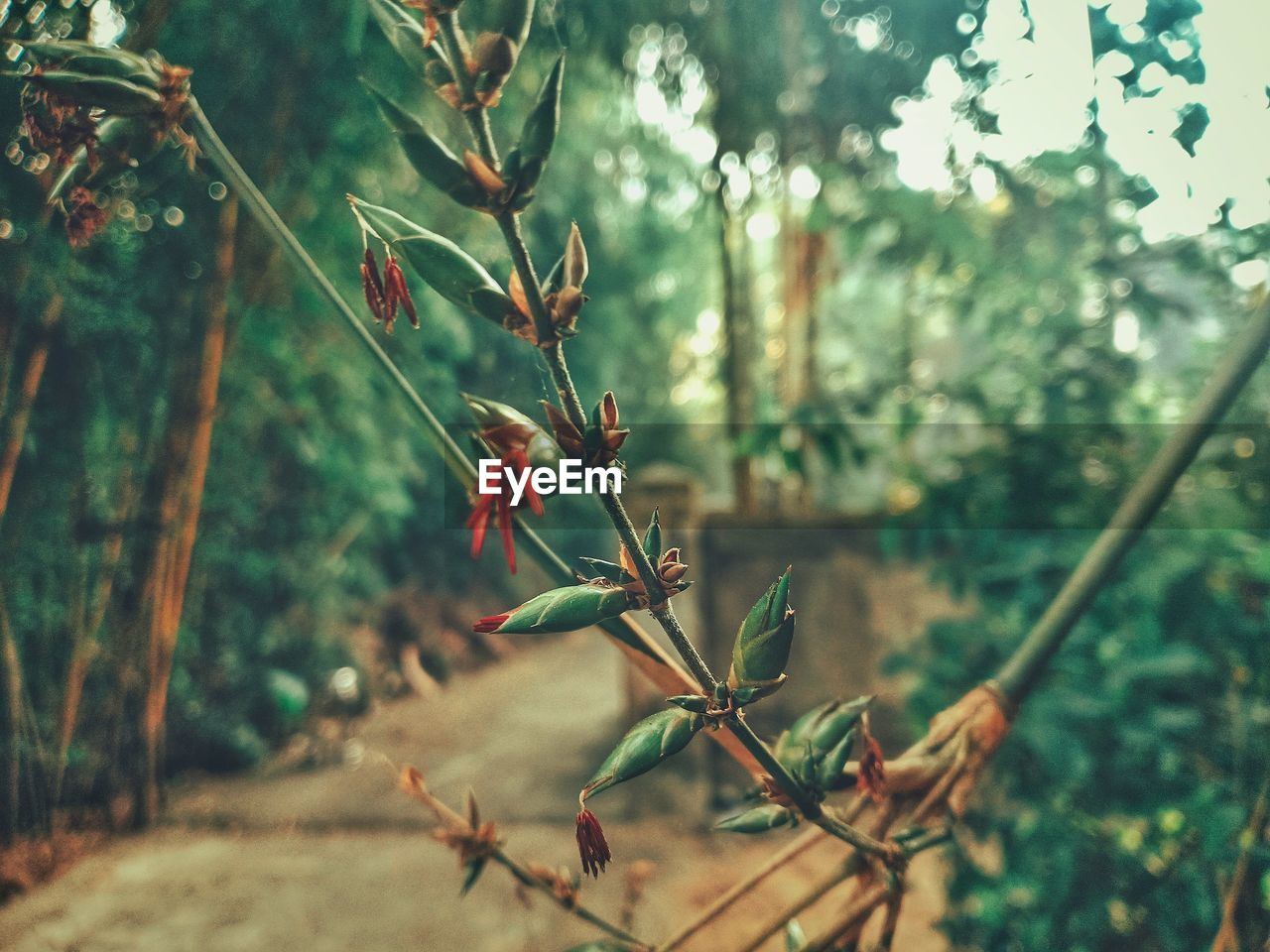 plant, growth, focus on foreground, beauty in nature, nature, day, no people, tree, close-up, green color, plant part, leaf, tranquility, outdoors, selective focus, flower, plant stem, freshness, flowering plant, land