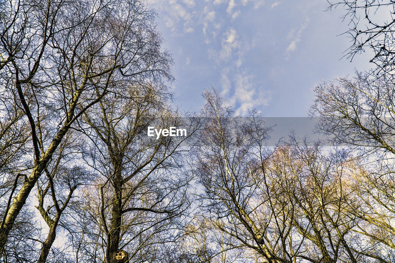 low angle view, tree, branch, bare tree, nature, no people, beauty in nature, sky, day, outdoors, growth