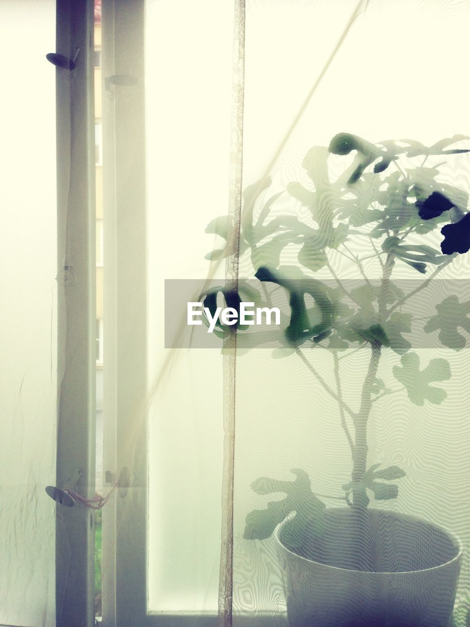 Potted plant viewed through window