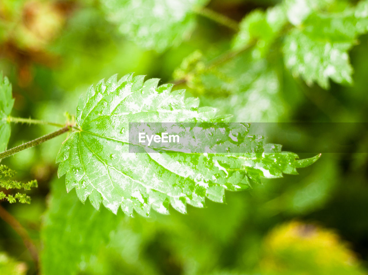 leaf, green color, drop, nature, close-up, day, focus on foreground, water, beauty in nature, fragility, outdoors, no people, freshness, growth