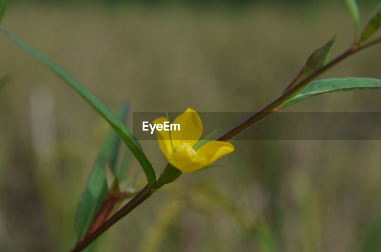 flower, yellow, growth, nature, fragility, petal, beauty in nature, plant, freshness, close-up, focus on foreground, outdoors, no people, flower head, day, blooming