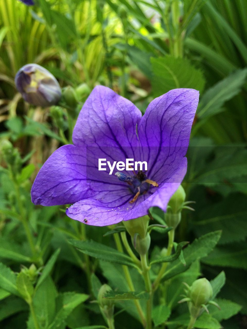plant, flowering plant, flower, vulnerability, freshness, growth, beauty in nature, fragility, purple, petal, close-up, inflorescence, flower head, nature, no people, plant part, leaf, day, green color, outdoors, springtime