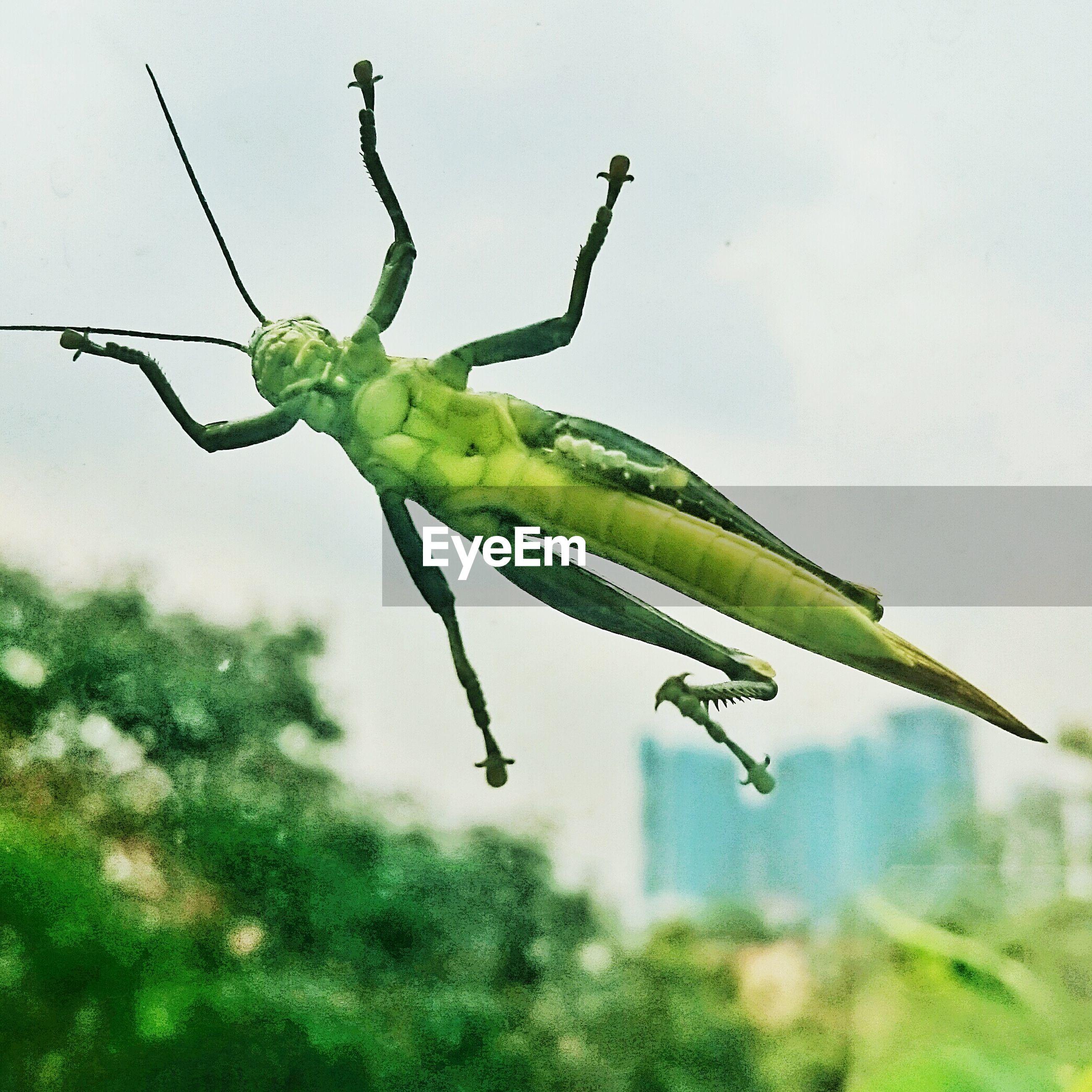 Grasshopper on window