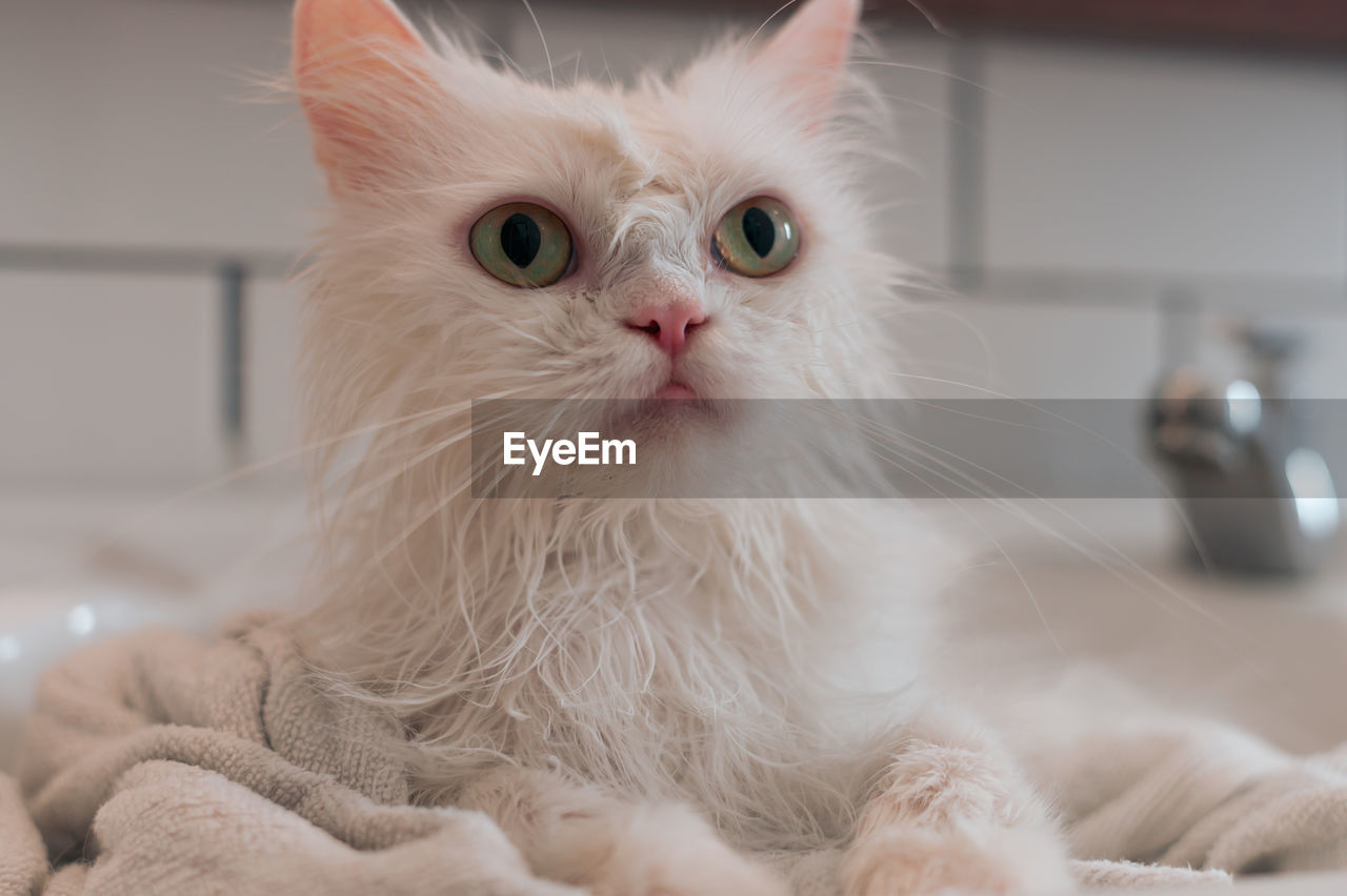 Close-up of white cat with towel in sink at home