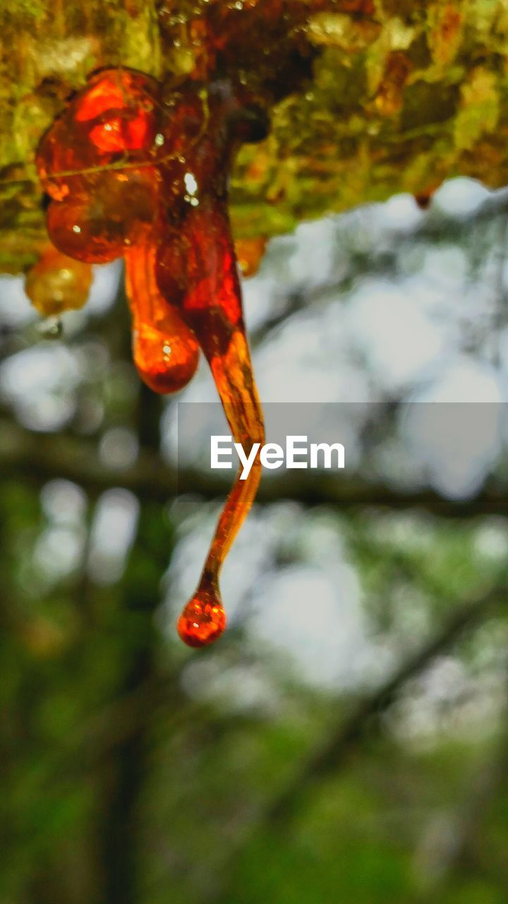 red, no people, focus on foreground, outdoors, nature, one animal, animals in the wild, close-up, day, beauty in nature, animal themes, water, tree, fragility