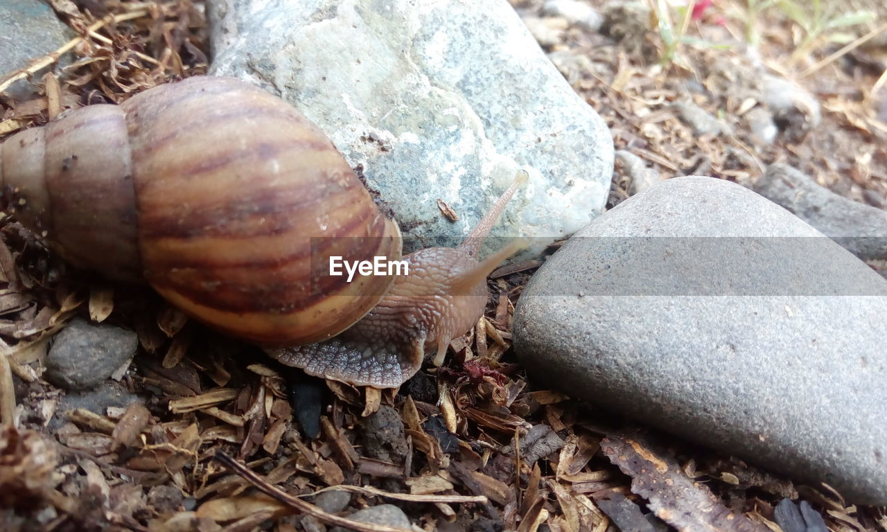 snail, animal themes, animal shell, one animal, wildlife, animals in the wild, gastropod, nature, no people, outdoors, day, close-up, animal wildlife, fragility