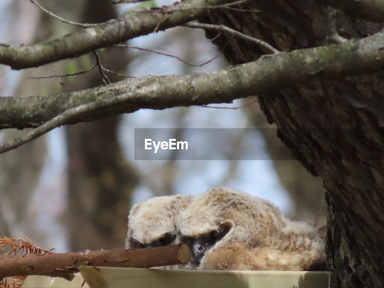 tree, branch, no people, day, plant, focus on foreground, selective focus, animals in the wild, close-up, animal wildlife, animal themes, vertebrate, nature, animal, outdoors, tree trunk, trunk, low angle view, one animal, perching