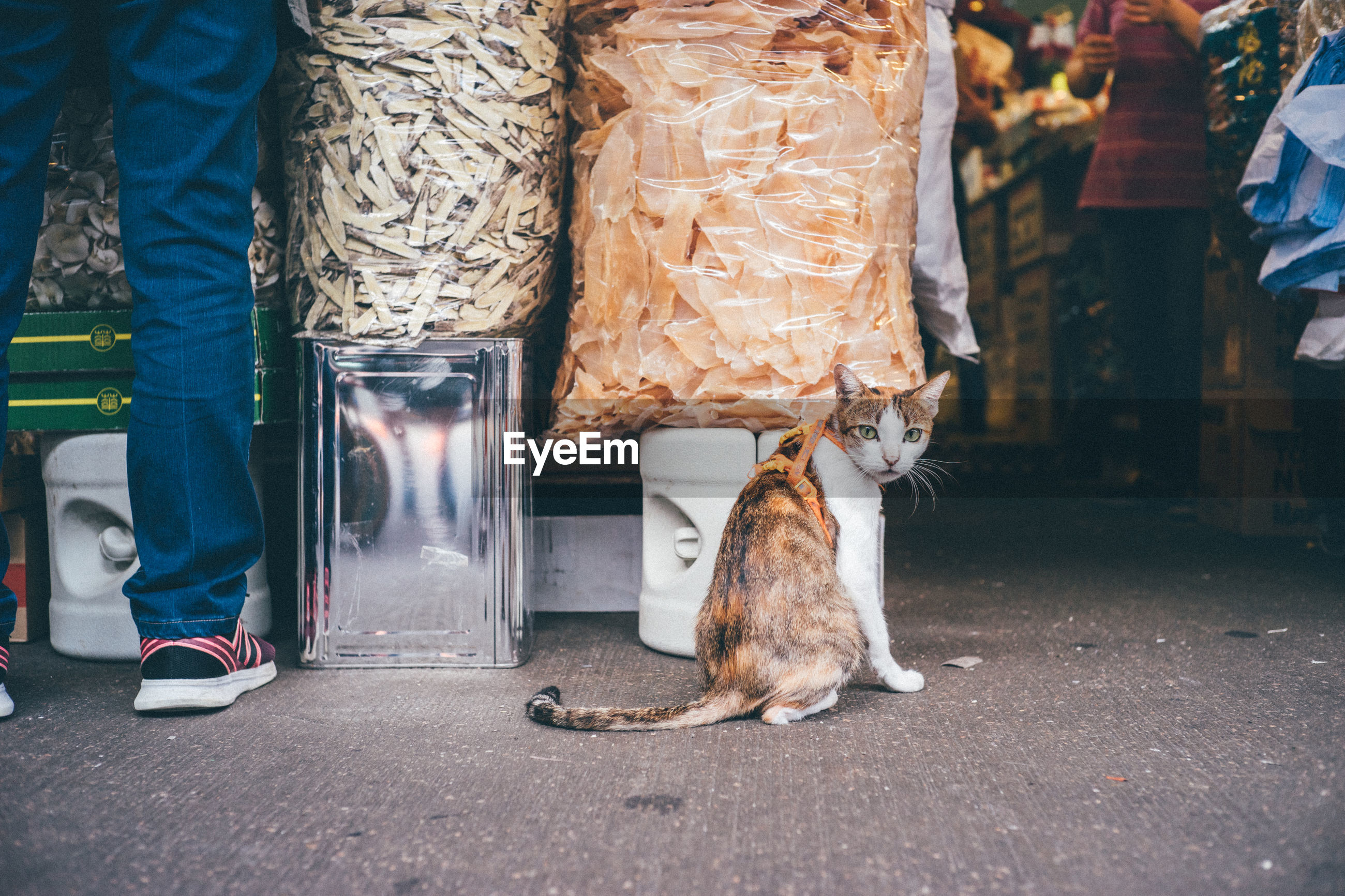 Portrait of cat sitting by food on street