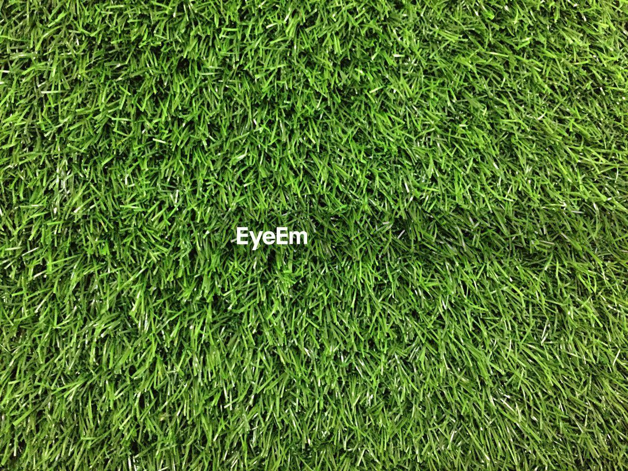 CLOSE-UP VIEW OF GRASSLAND