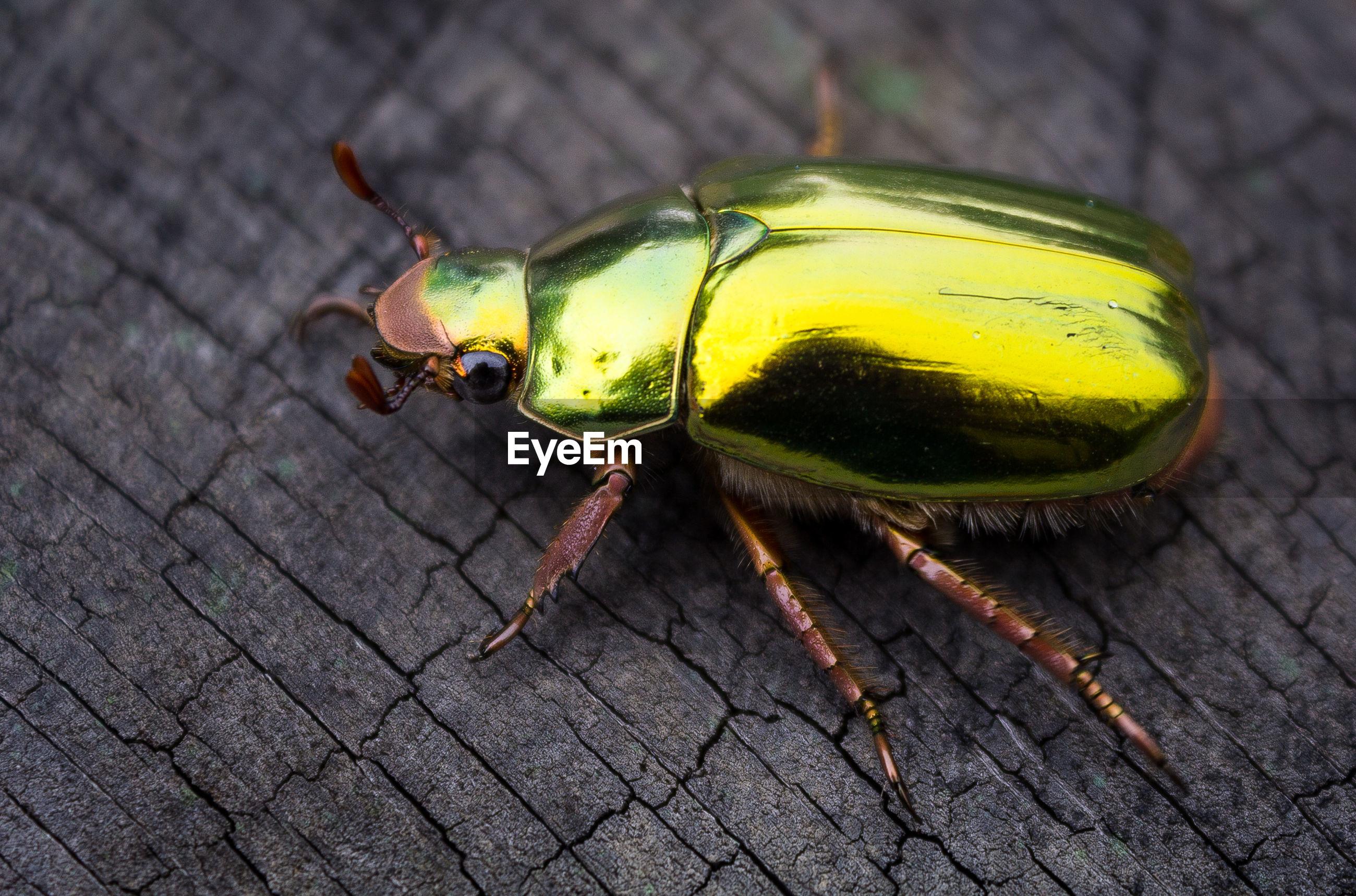 High angle view of beetle on wood