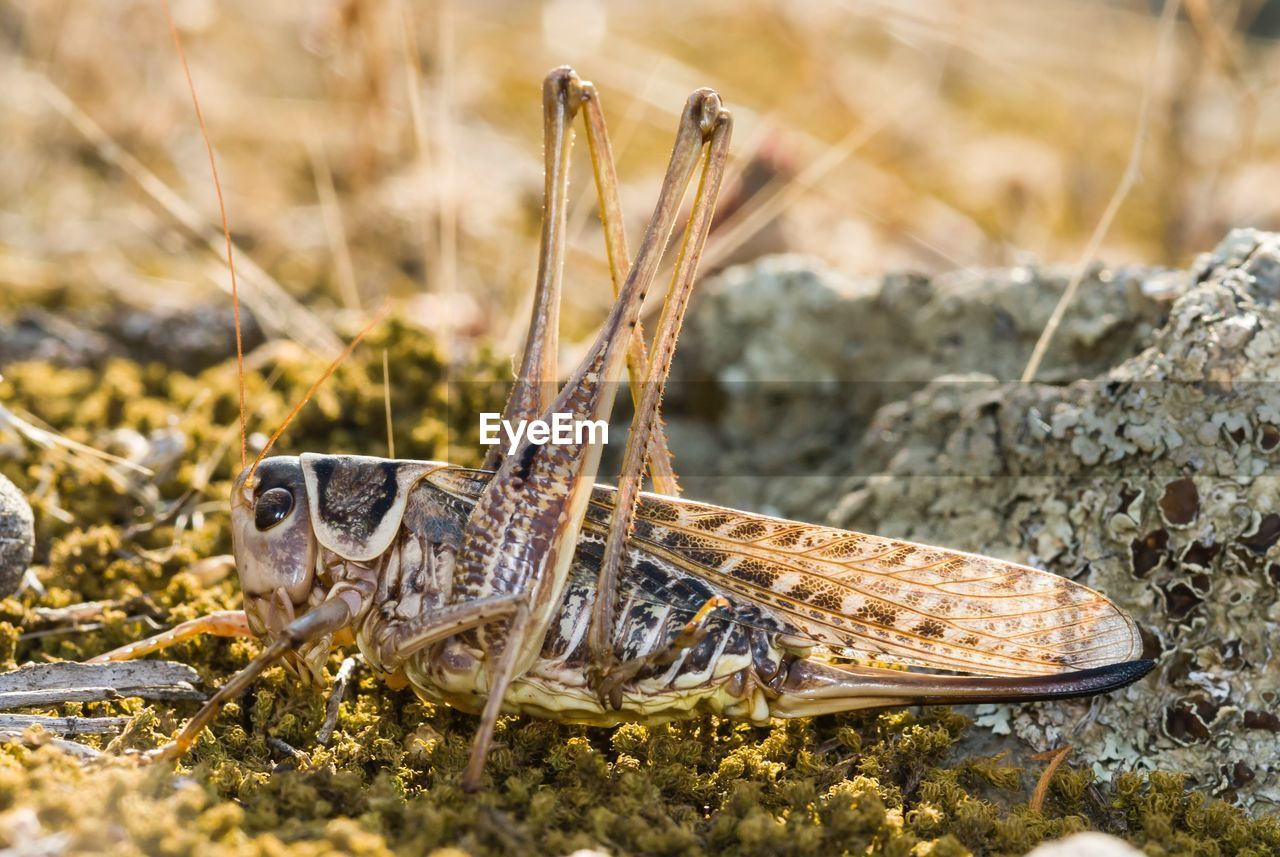animal wildlife, animal, animals in the wild, animal themes, one animal, nature, day, focus on foreground, close-up, invertebrate, solid, rock, no people, rock - object, outdoors, insect, selective focus, grass, plant, vertebrate, marine, butterfly - insect
