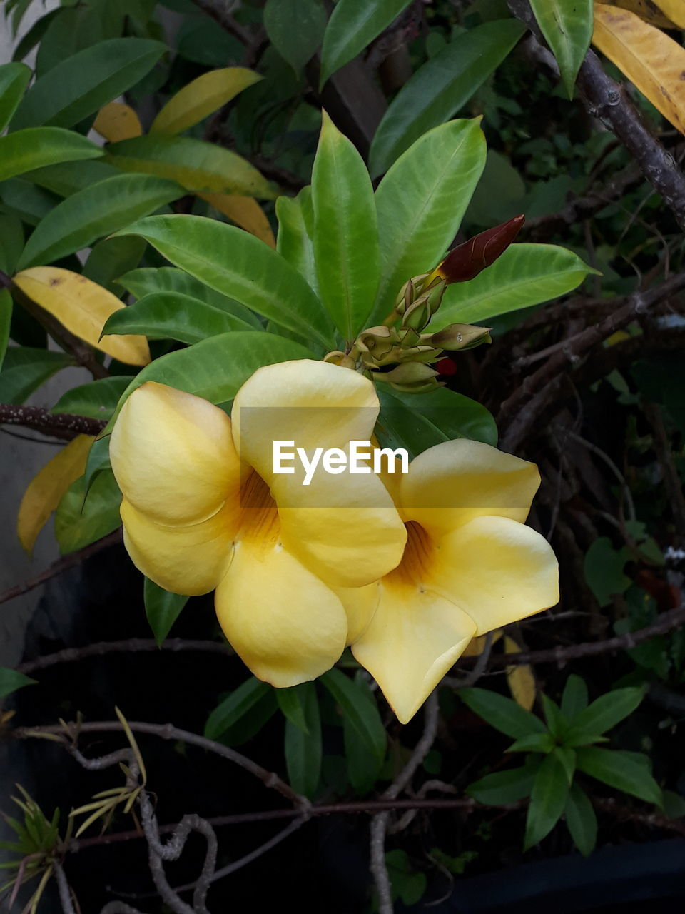 flower, leaf, growth, plant, freshness, nature, yellow, petal, beauty in nature, fragility, no people, outdoors, blooming, flower head, close-up, day