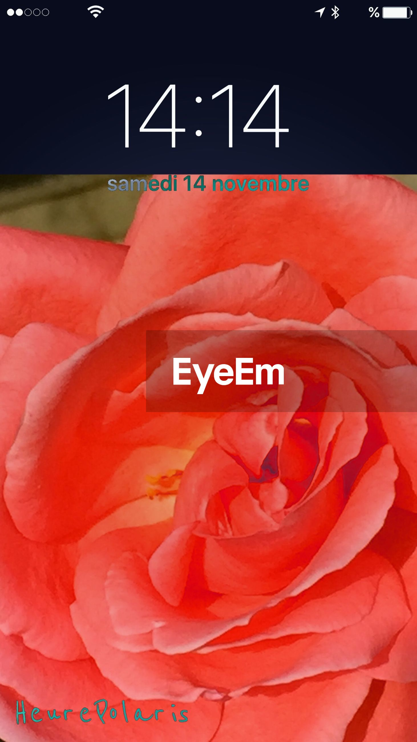 red, close-up, freshness, text, pink color, flower, western script, no people, rose - flower, petal, day, communication, backgrounds, high angle view, full frame, indoors, nature, beauty in nature, detail
