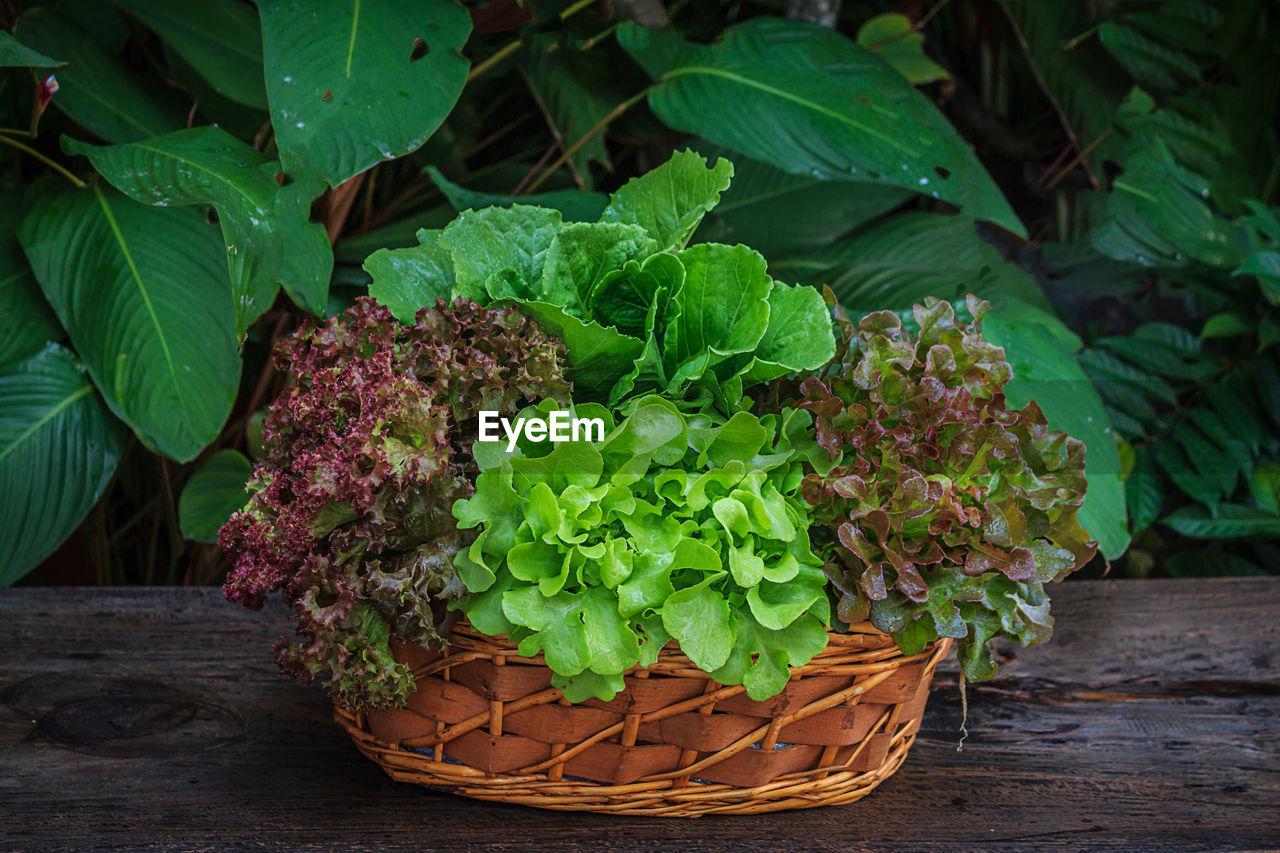 Fresh Vegetables In Wicker Basket On Table Against Plants