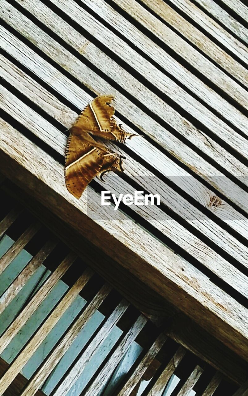 wood - material, one animal, animal themes, animal wildlife, no people, day, animals in the wild, outdoors, roof, close-up, nature, perching, mammal