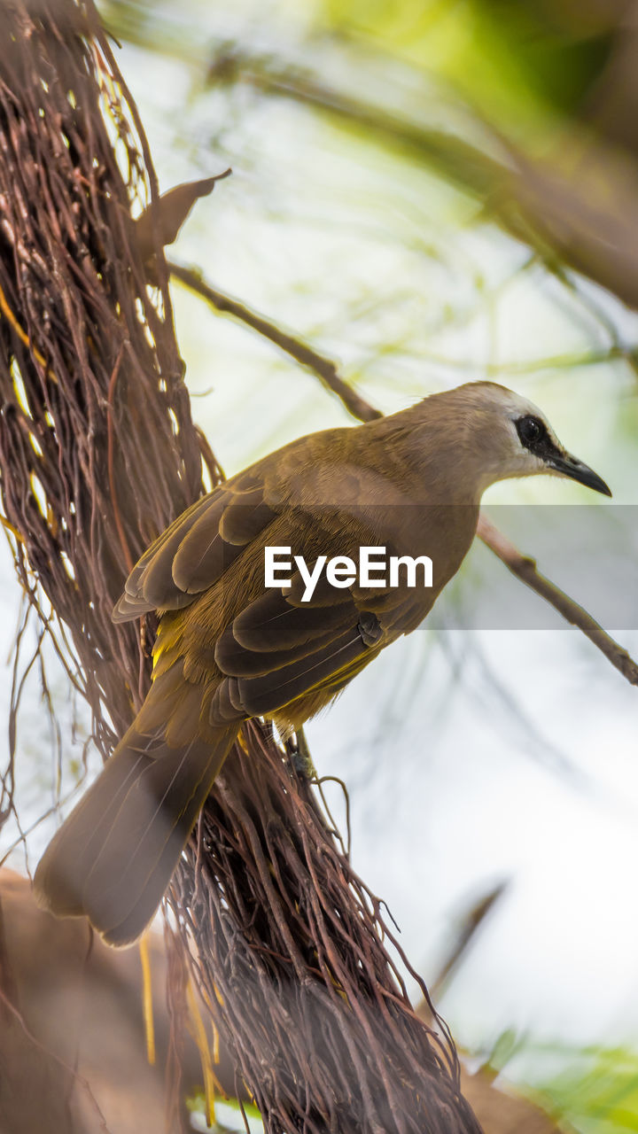 bird, animals in the wild, animal themes, animal wildlife, focus on foreground, nature, no people, day, one animal, close-up, outdoors, beak, perching, beauty in nature, tree