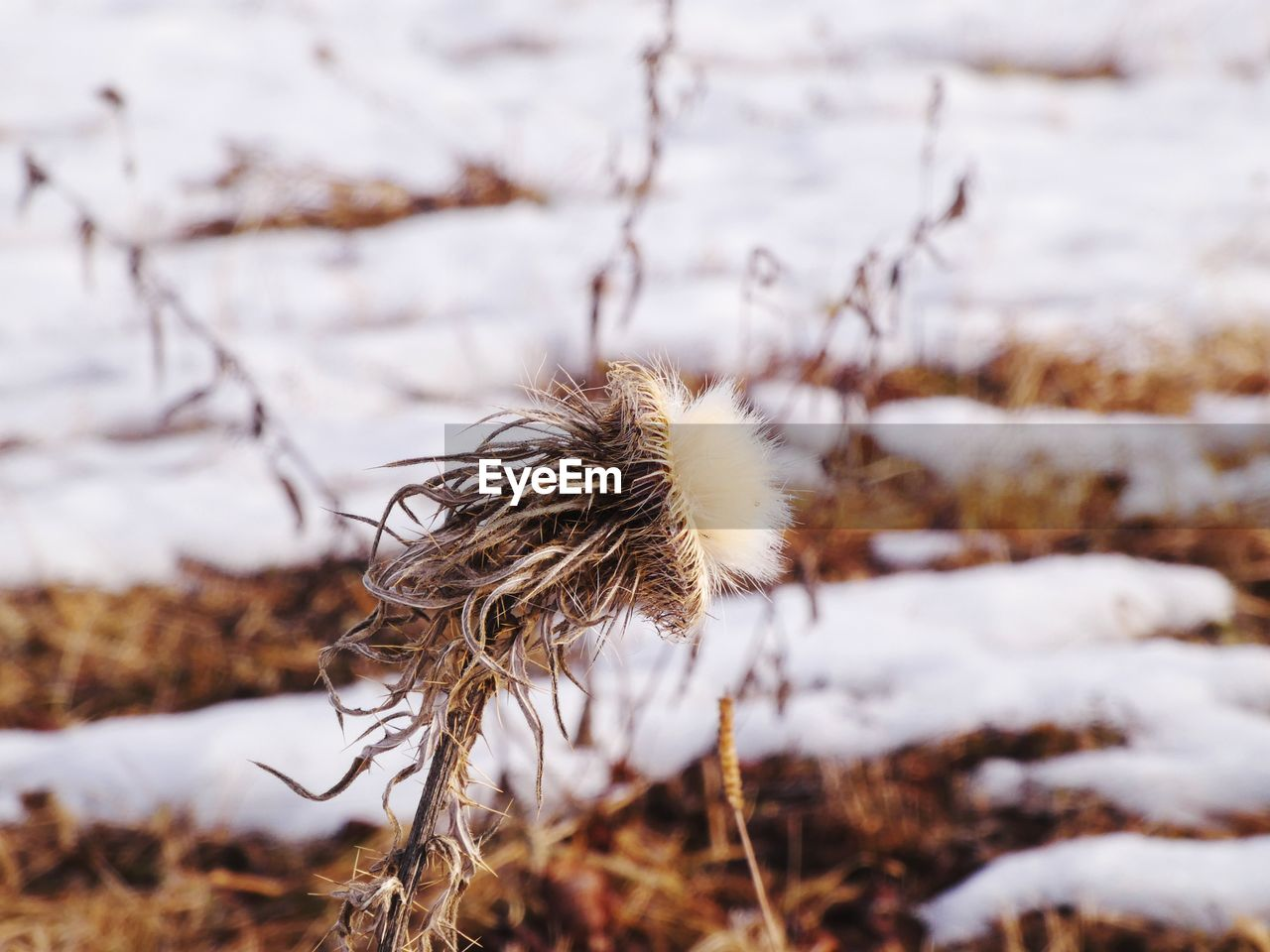 Close-up of dried plant on land