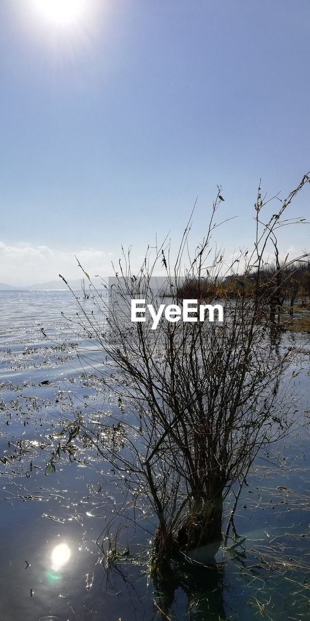 sky, water, plant, scenics - nature, beauty in nature, tranquility, nature, no people, tranquil scene, tree, day, winter, sunlight, cold temperature, non-urban scene, bare tree, outdoors, frozen