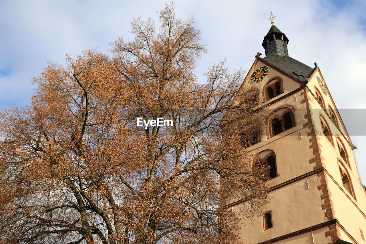 tree, architecture, building exterior, low angle view, built structure, building, religion, place of worship, belief, spirituality, sky, nature, plant, tower, branch, day, no people, outdoors, change, spire