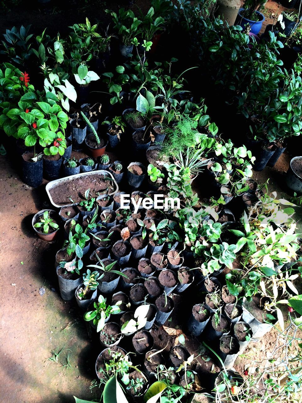 growth, plant, nature, high angle view, no people, day, outdoors, green color, beauty in nature, close-up, freshness