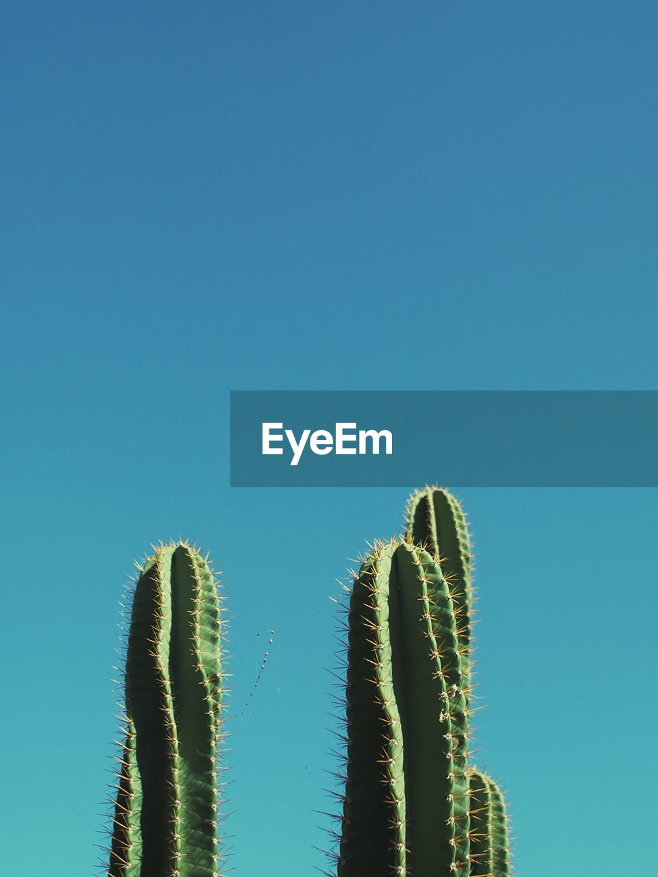 Low Angle View Of Cactus Against Clear Blue Sky